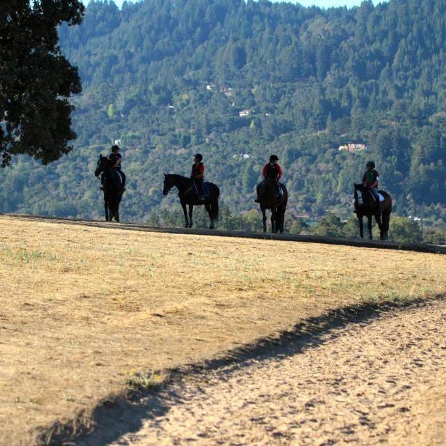 horses getting-shade